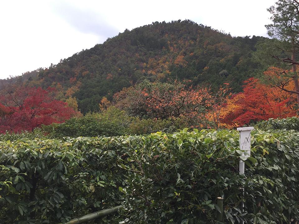 2017.11.27光悦寺5