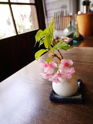 2015.03.31IIU-sakura