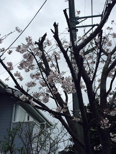 2015.04.06IShyoutan-one