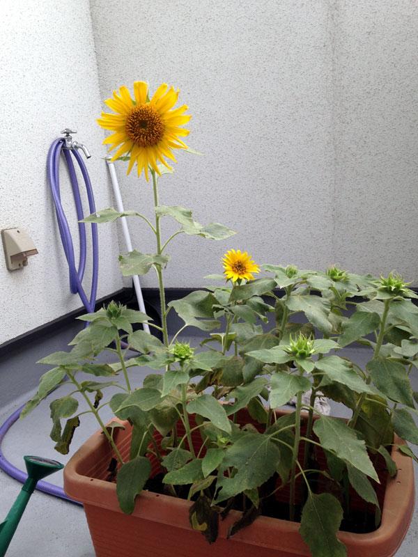 2015.08.31-CHS-himawari